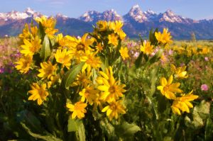 Teton Flowers Acrylic - Copy.jpg