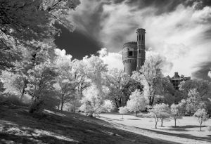 03 Eden Park - Infrared - Best in Show 2nd runner-up